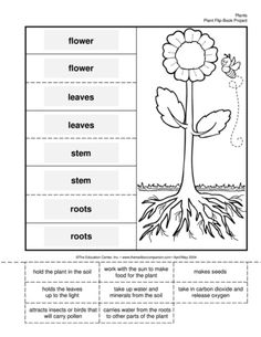 tiered instruction lesson plans